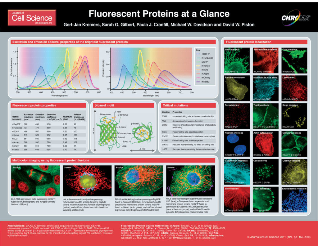 JCS Fluorescent Protein Poster
